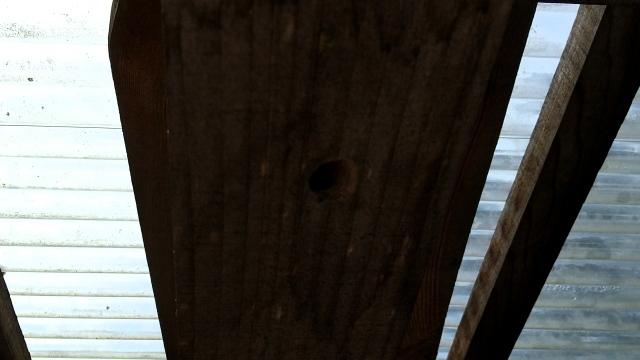 ハチの巣0831