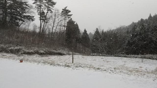 元旦雪景色0101