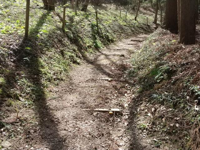 カタクリ群生地への道0410