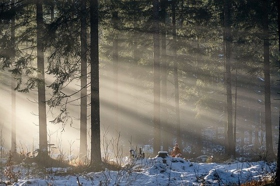 forest-5847268_640.jpg