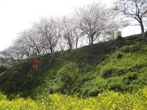 20200404ババさんは上で蓬摘みジジさんはこの谷で