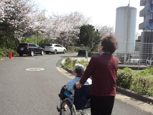20200419桜を見る