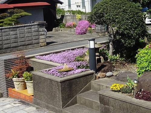 20200422その7隣の花とコラボ