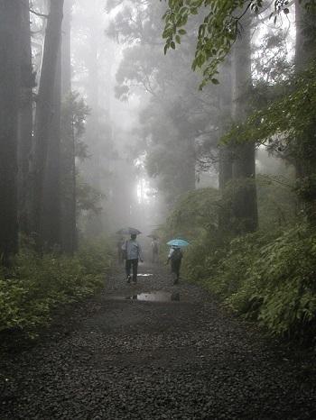 20210104箱根の杉並木