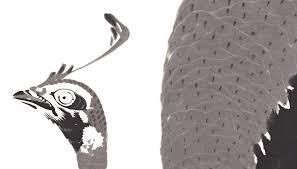 20210104若冲の鳥の羽根のかき方