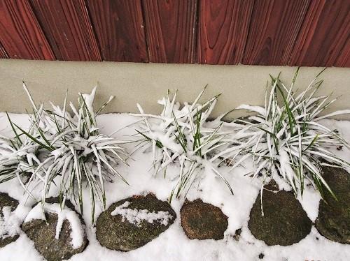 20210107雪が降る 010