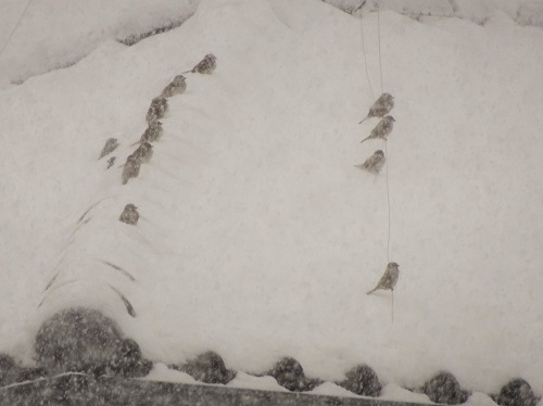 20210108雪かき 047