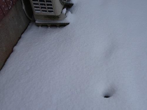 20210108雪かき 055