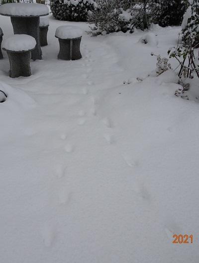 20210109我が家の雪景色 017