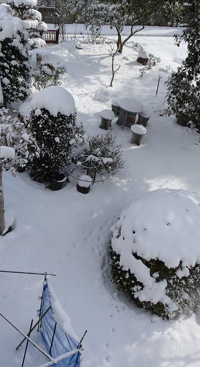 20210109我が家の雪景色 035