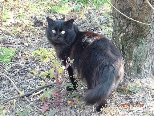 20210113黒い野良猫3