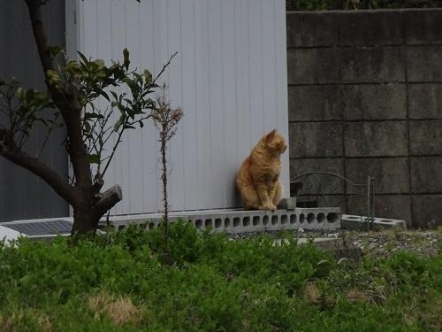 20210113赤い野良猫3