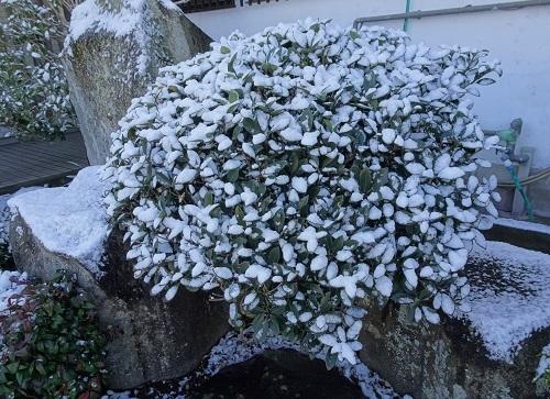 20210217雪が降った 037