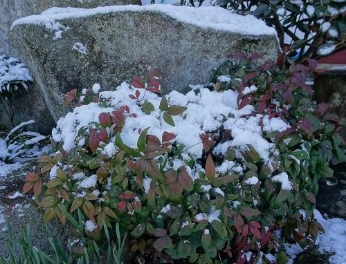 20210217雪が降った 036
