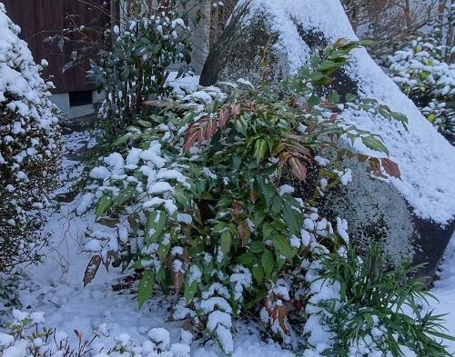 20210217雪が降った 040