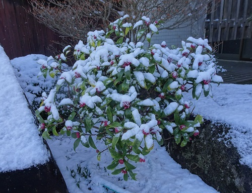 20210217雪が降った 045