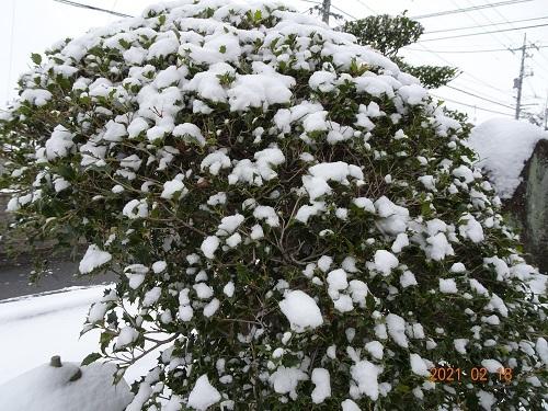 20210218雪南天8 005