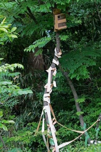 ガムテの木