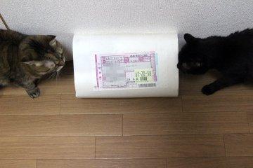 kotasuzu358.jpg