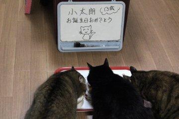 kotasuzumiyu168.jpg