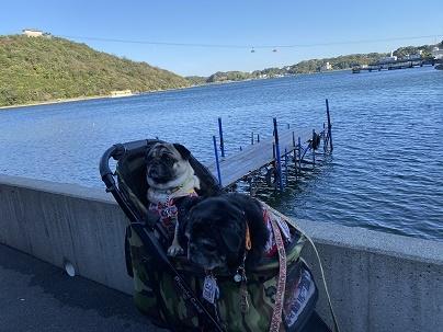 おパグと浜名湖