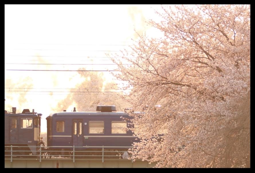 桜と12系