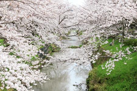 黒井桜橋周辺2