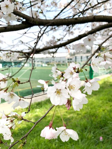 福知山フットボールフィールド様周辺1