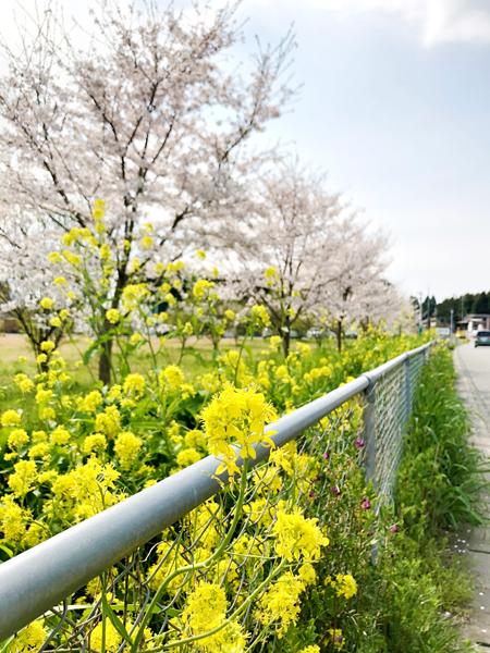 福知山フットボールフィールド様周辺2