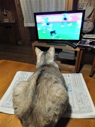 2014年6月サッカーを見るのが好きでした。