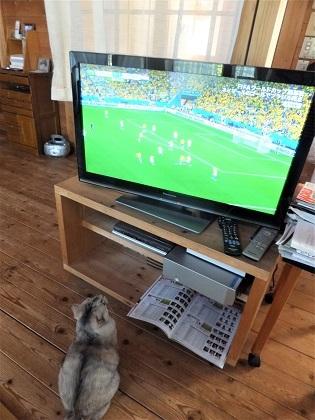 2014年6月ワールドカップブラジル戦を見る春ちゃん