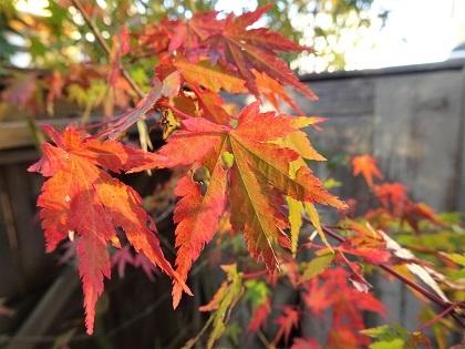 ところどころ色づいてきた紅葉