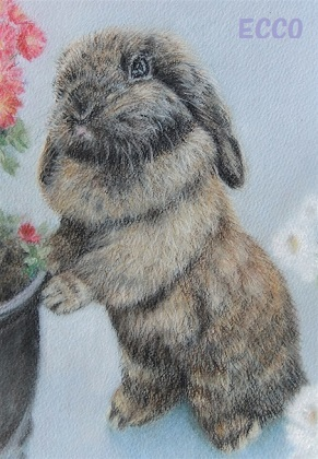 康ちゃんのウサギ