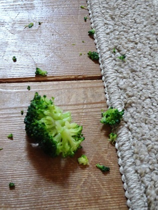 食い散らかされたブロッコリー