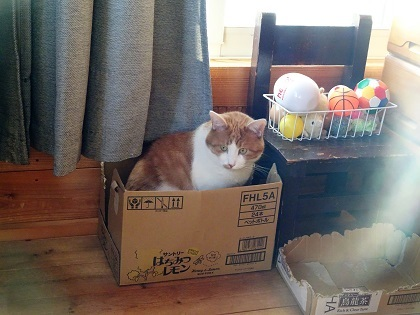 箱に入ってたり