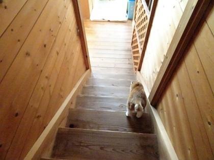 階段を下りて