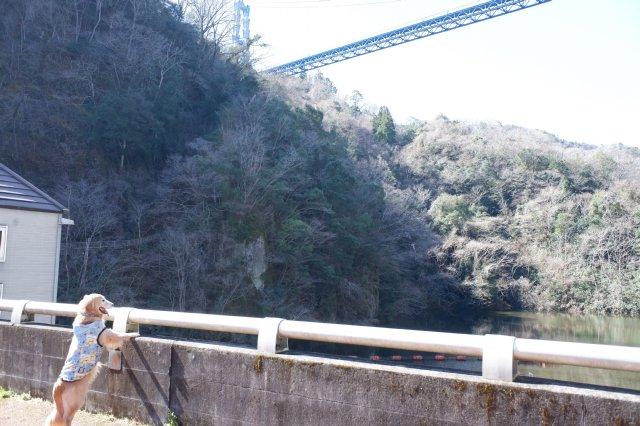 竜神大吊橋 竜神峡 亀ヶ淵 2020.3.15 040