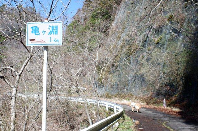 竜神大吊橋 竜神峡 亀ヶ淵 2020.3.15 061