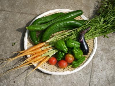 野菜の収獲