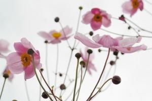 blossom-215565_640.jpg