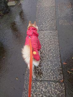 歩きやすいの