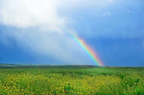 200417 菜の花と虹