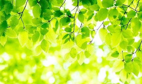 200428 緑 葉