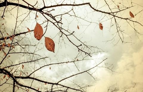 201211 冬に向かう