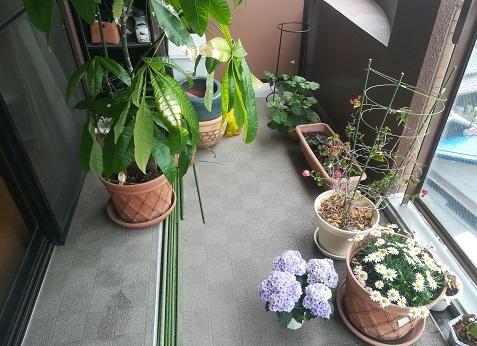 4 ベランダ 観葉植物もヒ外へ