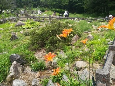10 六甲高山植物園を散策