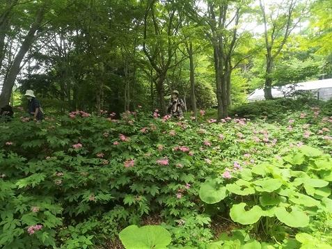 8 六甲高山植物園を散策