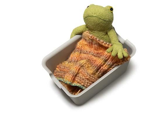 とん挫スヌードにカエル