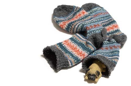 レギア靴下と眠り犬