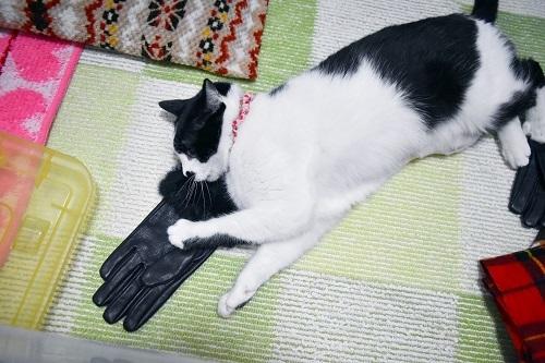 くぅと手袋